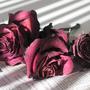 乾燥玫瑰慢漫遊