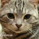 創作者 aninko&baron 的頭像