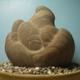 創作者 化石國寶工坊 的頭像
