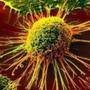 癌症細胞自殺密碼
