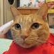 創作者 黃色小貓 的頭像