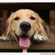 創作者 黃金獵犬-尼兒家 的頭像