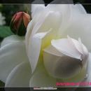 henrymom40 圖像