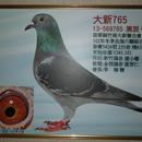 新竹鴿舍 圖像