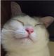 創作者 凱西貓 的頭像
