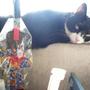 野貓--愛與流浪