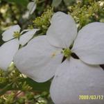 MaUreen