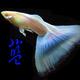創作者 水噹噹孔雀魚 的頭像