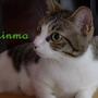 拾陌 Shinmo