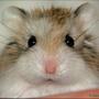 老公公鼠*麥麥*