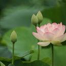 yuki 圖像