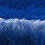王智海過棠跺森涼
