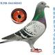 創作者 鬥陣賽鴿競翔聯盟 的頭像