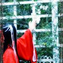 雪蝶 圖像