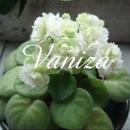 vaniza瑪嘉烈 圖像