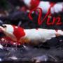 vin_fish