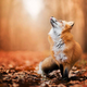 創作者 雪狐 的頭像