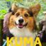 KUMA(黃熊)